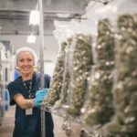 'Very, very rich market': Why top Canadian marijuana companies all have their eyes on Europe