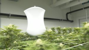 Tech companies and pot producers becoming fast friends