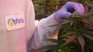Cannabis producer Aphria stock plunges for 2nd day as company rebuts short seller\'s fraud allegations