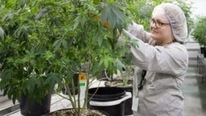 Canopy Growth third-quarter results may be a sign of things to come in the cannabis industry.