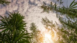 Tilray opens its EU Campus as a hub for cultivation, processing, packaging, distribution, and research for the European Union.