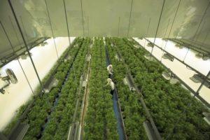 Health Canada changes cannabis licensing process in bid to cut wait times