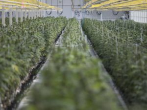 Aphria posts surprise cannabis profits thanks to purchase of Germany pharmaceutical distributor.