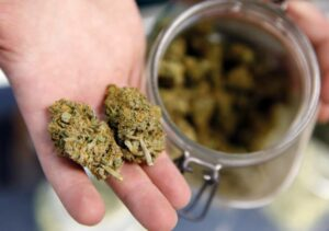 Judge orders cannabis licensing stay after disagreement about disqualification grounds.