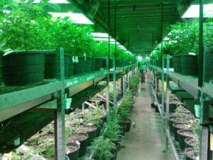 An estimated 82 per cent of Quebecers prefer black market cannabis.
